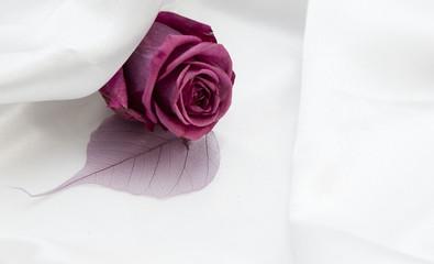 rose fleur romantique sur fond de satin