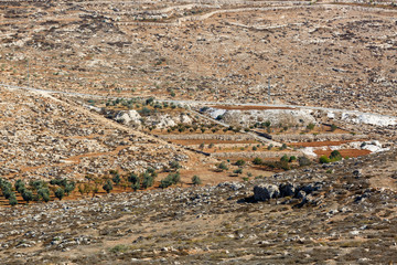 Cultivated palestinian field and olives tree in a mountain