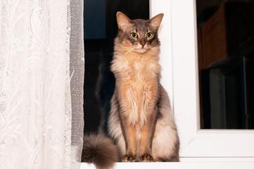Lovely cat portrait