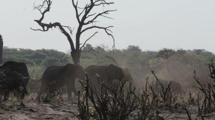 A herd of African elephants in african bush