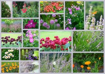 """composition'fleurs,floraison saisonnière"""""""