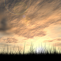 Black grass over sky sunset background