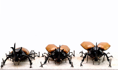 characteristics Bug on White Background