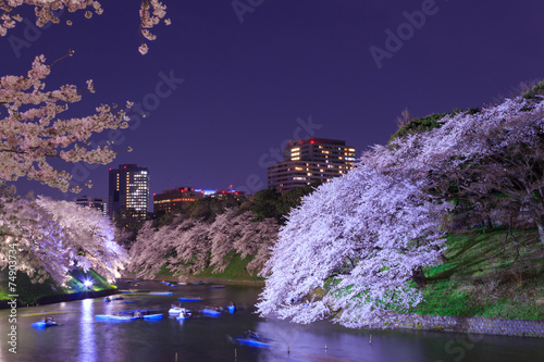 Deurstickers Kersen Cherry blossoms in the twilight at Chdori-ga-fuchi in Tokyo