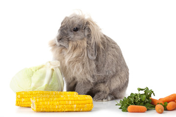 Rabbit with some vegetable over white