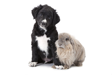 puppy and bunny in front of white background