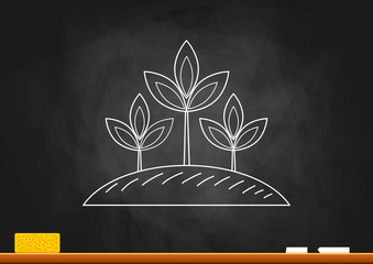 Drawing of plant on blackboard