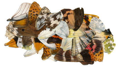 Isolated various butterfly wings against a white background