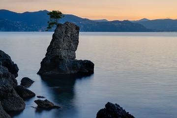 Pine tree rock in Portofino park