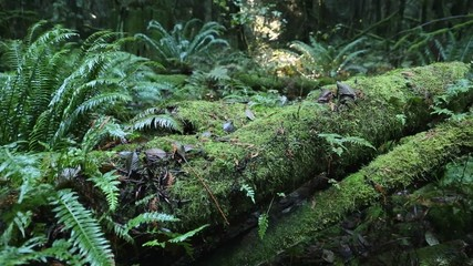 Pacific Northwest, Moss Covered Logs