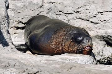 Sleeping Seal in Valencia park