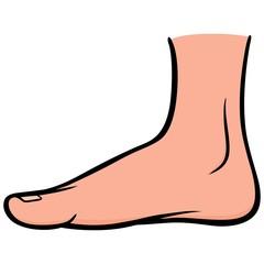 Inside Foot
