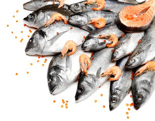 Fresh catch of fish and shrimps, isolated on white