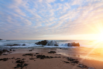 sunny shorelin