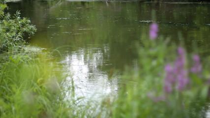 flowers over stream