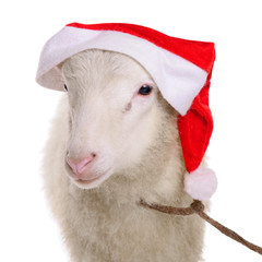 Sheep in Christmas hat