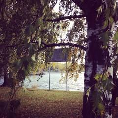 Birch with Maple's Leaves, Savonlinna, Finland