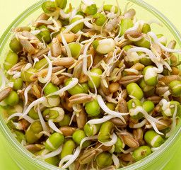 various bean sprouts