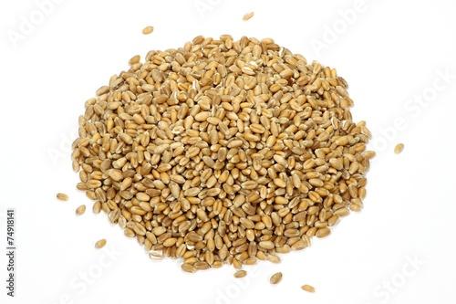 Weizenkörner isoliert auf weißem Hintergrund - 74918141