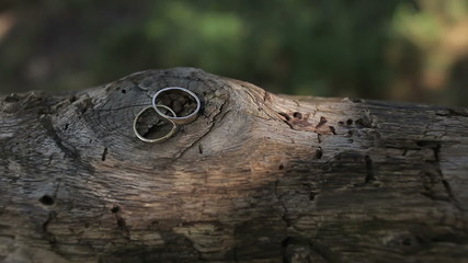 Wedding rings on a tree log