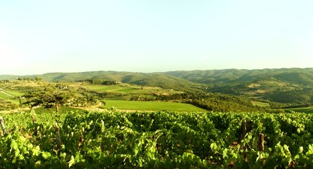 Tuscany Nature Landscape Vineyard Grape Wine Agriculture Summer