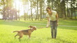 Young woman plays with his beagle Dog friend