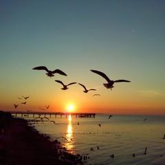 Seagulls squad