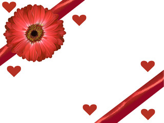 red gerbera daisy and ribbon with hearts valentines background
