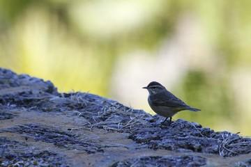 Wild bird at the Fairchild Gardens