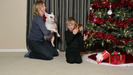 Boy gets French Bulldog puppy for Christmas
