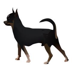 Chihuahua 2014_11_27_04228