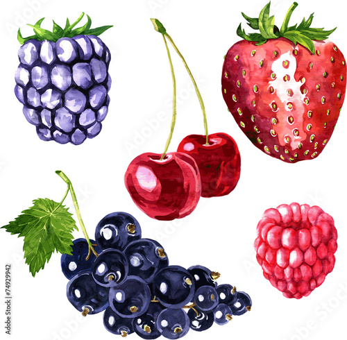 vector set of watercolor drawing berries - 74929942