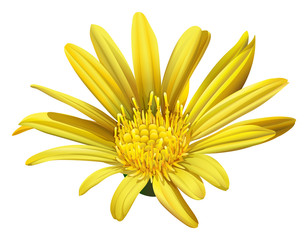 A yellow sunflower