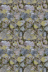 stones in moss and lichen seamless background