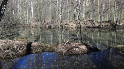 Peatbog on Marshland  - static shot.