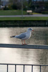 Seagull perched on metal railing