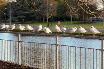 Seagulls perched on metal railing