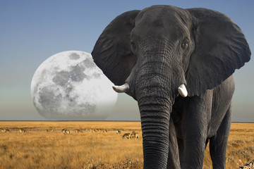 Moon rising over wildlife in Etosha National Park in Namibia