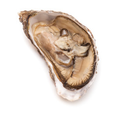 Raw oyster isolated on a white studio background.
