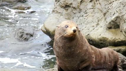 Seal shakes his head