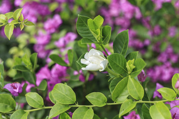 white flower and purple flowers