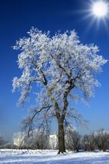 Alone winter tree against blue sky