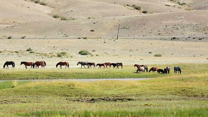 Wild horses grazing in the fields