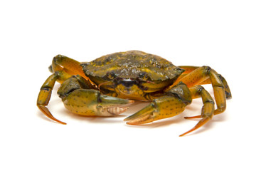 Crab on white