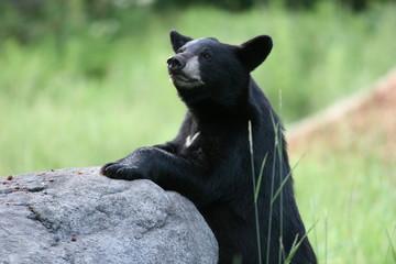 Praying Rock