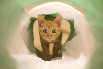 gatto nel tubo che gioca