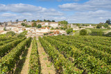 Vineyard at Saint-Emilion, France - Fine Art prints