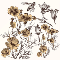 Collection of vector engraved hand drawn flowers in vintage styl