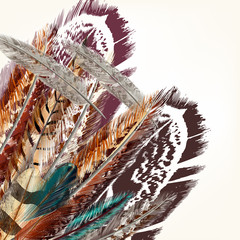 Colorful feathers vector background