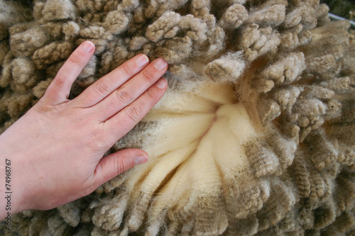 Poster Oceanië Woman's hand over merino wool